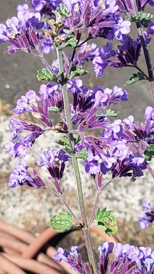 Beautiful purple wildflowers in the garden royalty free stock photos