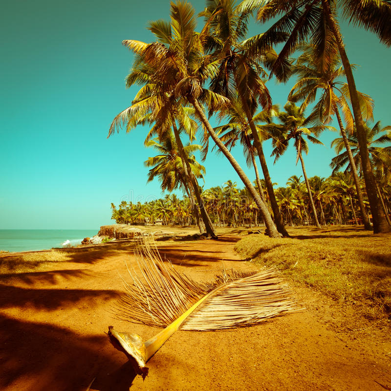 Beautiful Sunny Day At Tropical Beach Royalty Free Stock