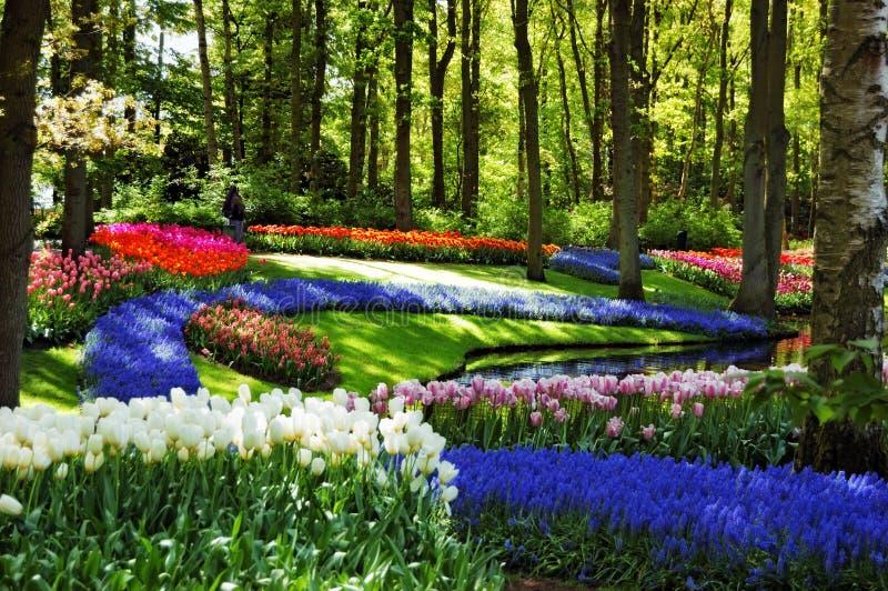 Beautiful sunny morning at the Keukenhof Gardens royalty free stock photo