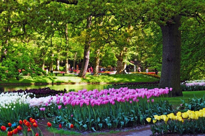 Beautiful Sunny Morning At The Keukenhof Gardens Stock Images