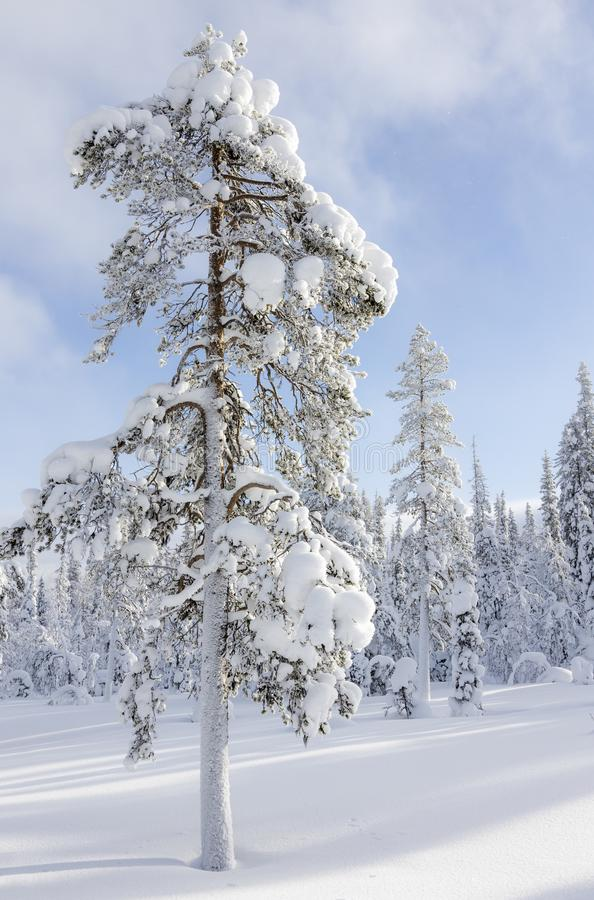 Beautiful sunny winter day in Northern Finland stock photos
