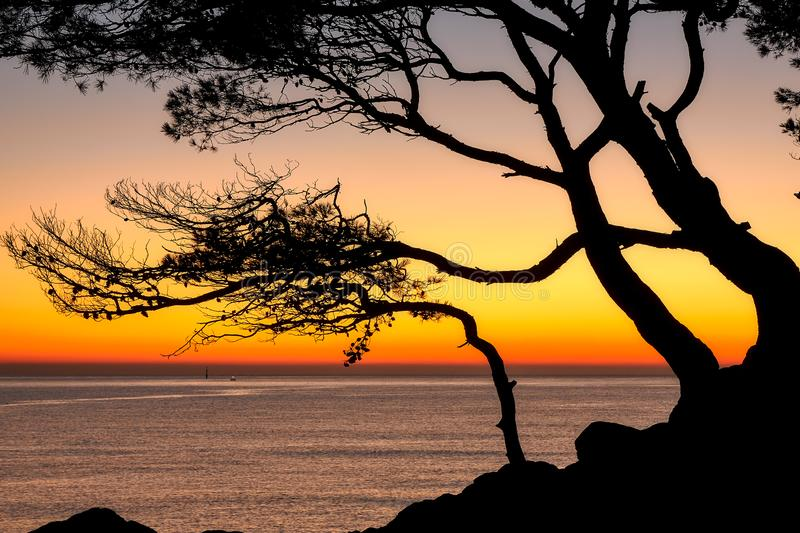 Beautiful sunrise color over the coastal in a Spanish Costa Brava with pine tree silhouette stock photography