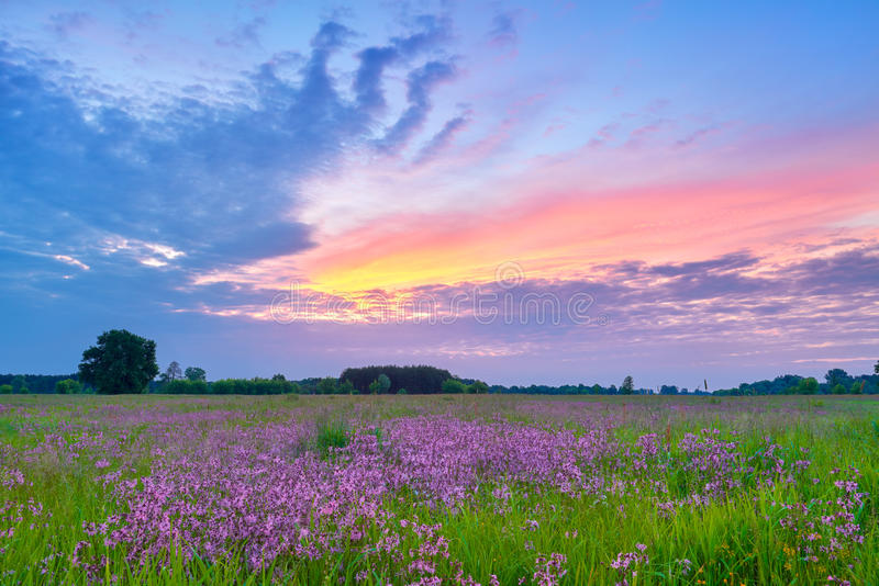 Beautiful sunrise countryside field flowers sky clouds landscape royalty free stock photos