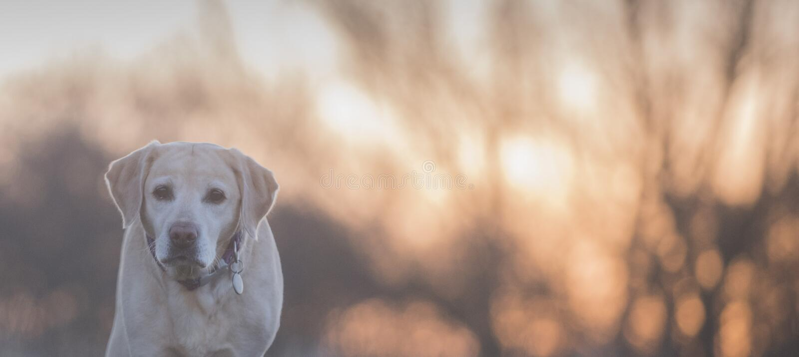 Beautiful sunrise. A lone tree and a dog in front of a beautiful sunset stock images