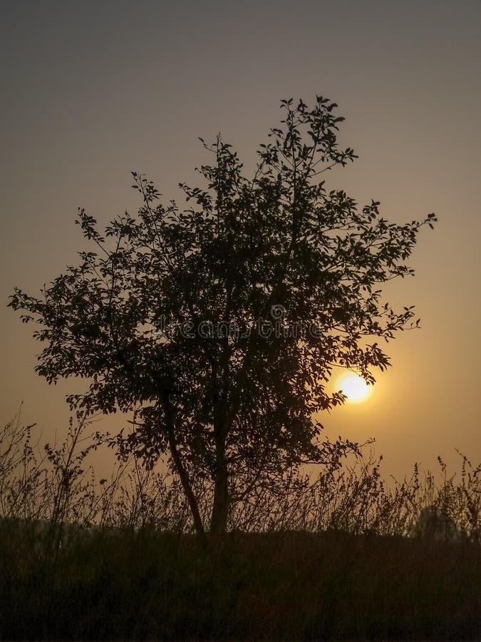 Beautiful sunrise morning royalty free stock image
