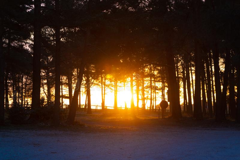 Beautiful sunrise morning scene in the forest stock image