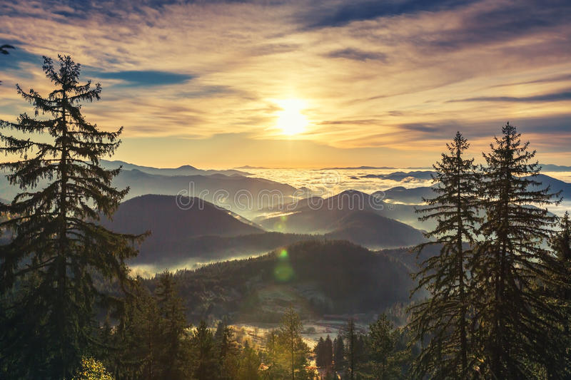 Beautiful Sunrise over pine forest on the mountain slope stock photos