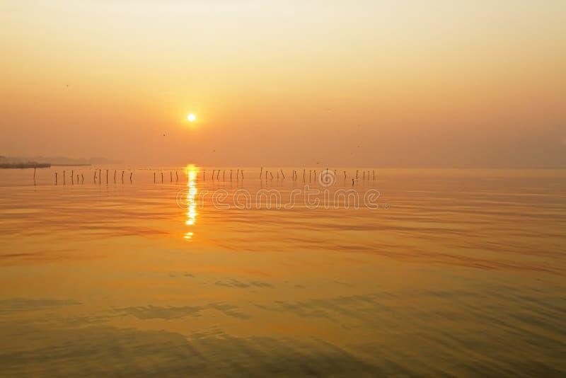 Beautiful sunrise with seagull stock photos