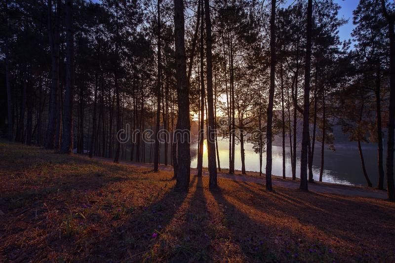 Beautiful sunrise and shadows of the trees stock photo
