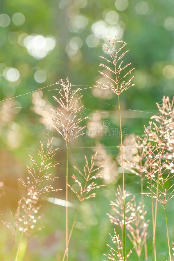 Beautiful sunrise in springtime, sunbeam ray shining through a forest on wild flowers and cobweb. Art transparent and bokeh royalty free stock photos