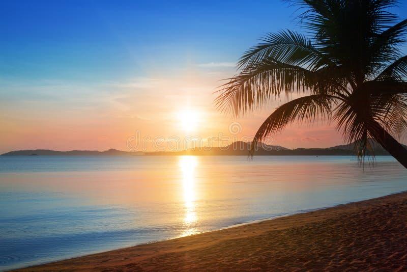 Beautiful sunrise on tropical paradise island beach landscape, scenic sunset on sea coast golden sun, blue sky, pink clouds, palm stock image