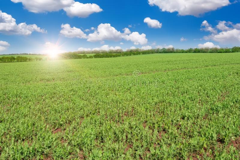 Green field and beautiful sunrise. stock images