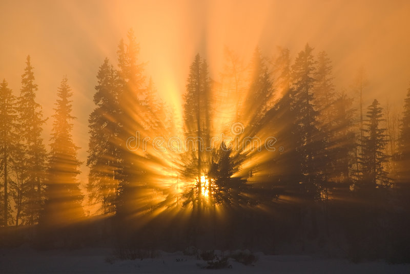 Beautiful sunset. With tree silhouettes in the mist on the horizon stock images
