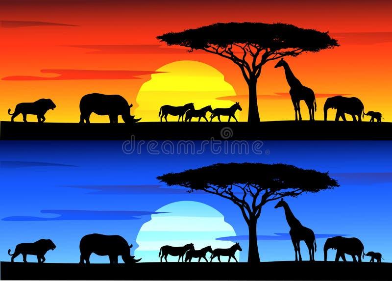 Beautiful sunset background on Africa wildlife stock photography