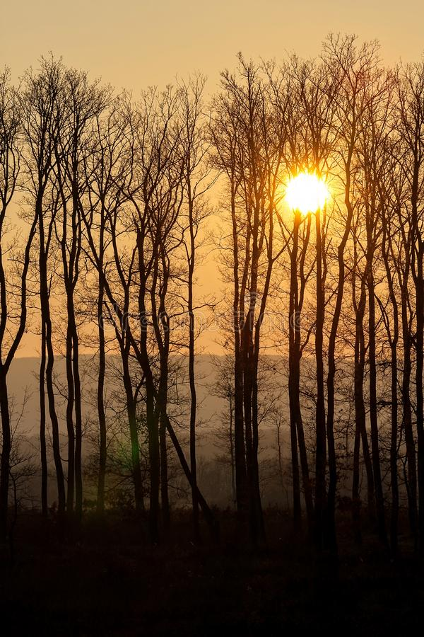 Beautiful sunset behind a clump of trees stock image