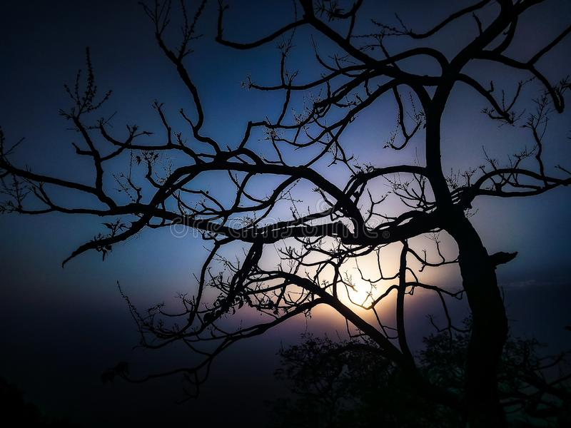 A beautiful sunset behinde the tree and editing at its pit and a pic clicked at right time. A beautiful sunset behinde the tree and editing at its pit and a pic royalty free stock photo
