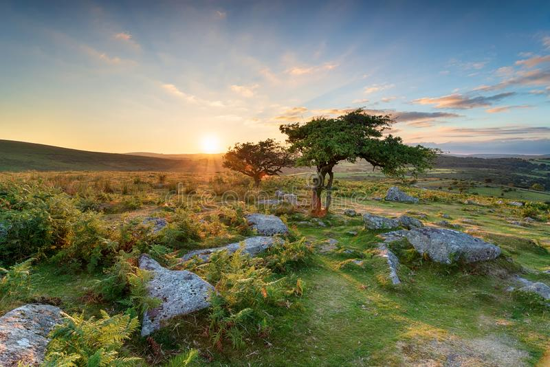 Sunset at Combestone on Dartmoor. Beautiful sunset at Combestone Tor near Hexworthy on Dartmoor National Park in Devon stock images