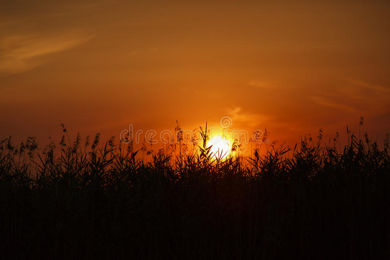 Beautiful sunset on Danube Delta royalty free stock photography