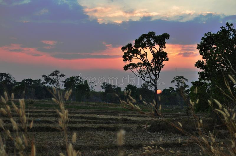 Sunset in farm royalty free stock photo