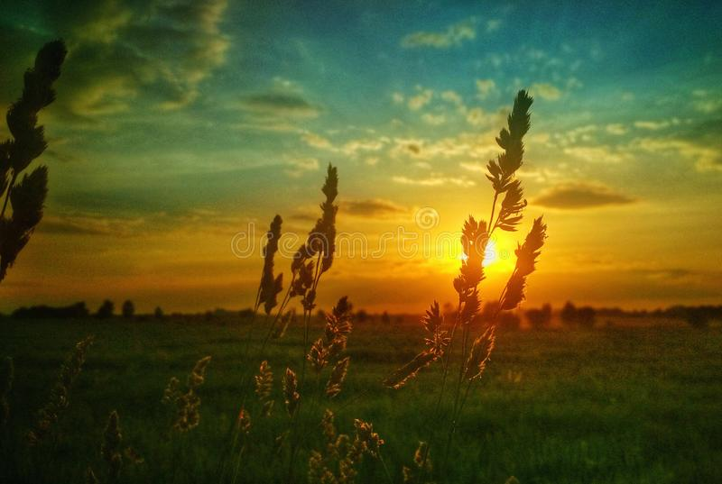 Beautiful sunset on the field through wildflowers and grasses. Beautiful sunset on the field through the wildflowers and grass. Nature in the evening stock images