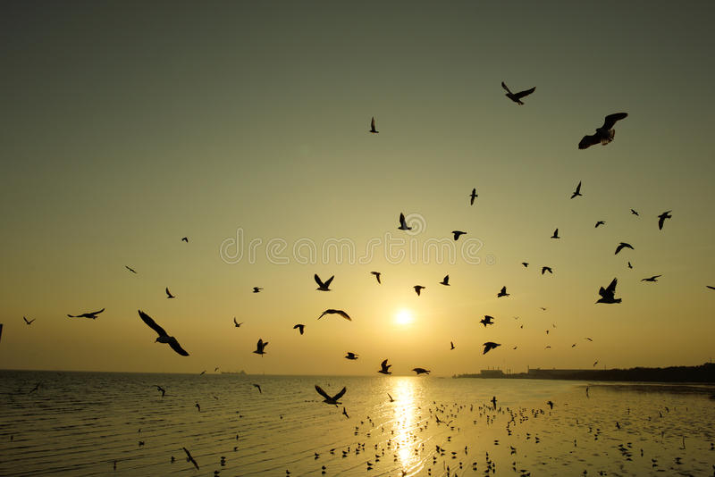 Beautiful sunset and flying birds over the sea. Surface stock image