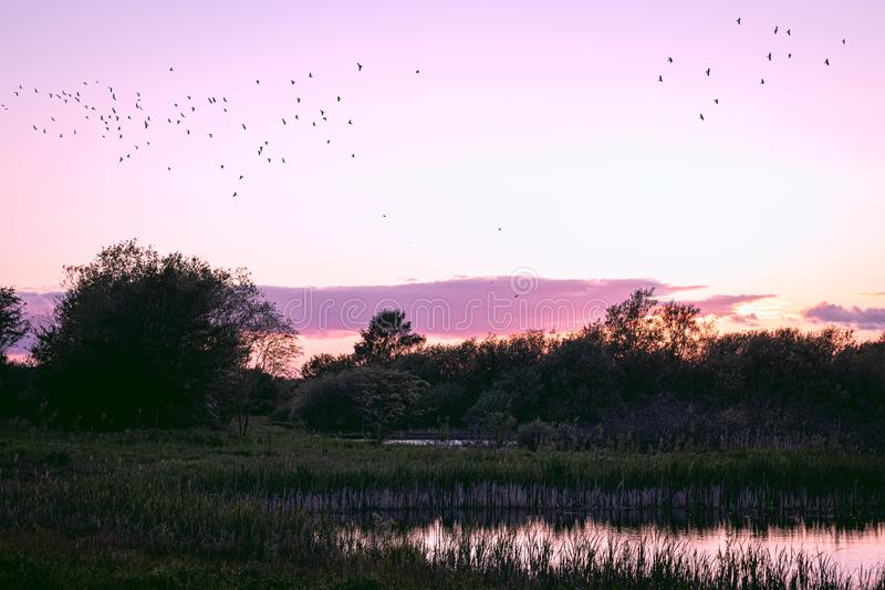 Beautiful sunset lake and birds. A beautiful sunset over a lake and trees with birds in the sky with a great almost purple sky royalty free stock photography