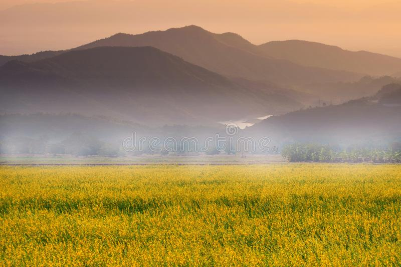 Beautiful landscape with sunset and flower field. stock photos