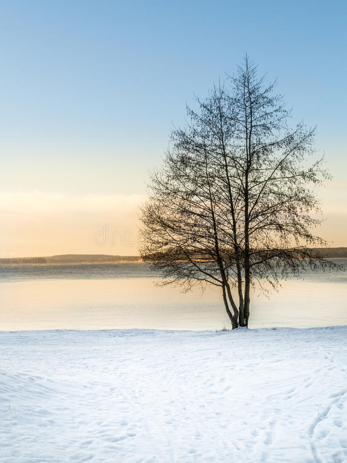 Beautiful sunset late winter afternoon with a single tree. Beautiful sunset late winter afternoon. Single tree against snow and icy water stock photos