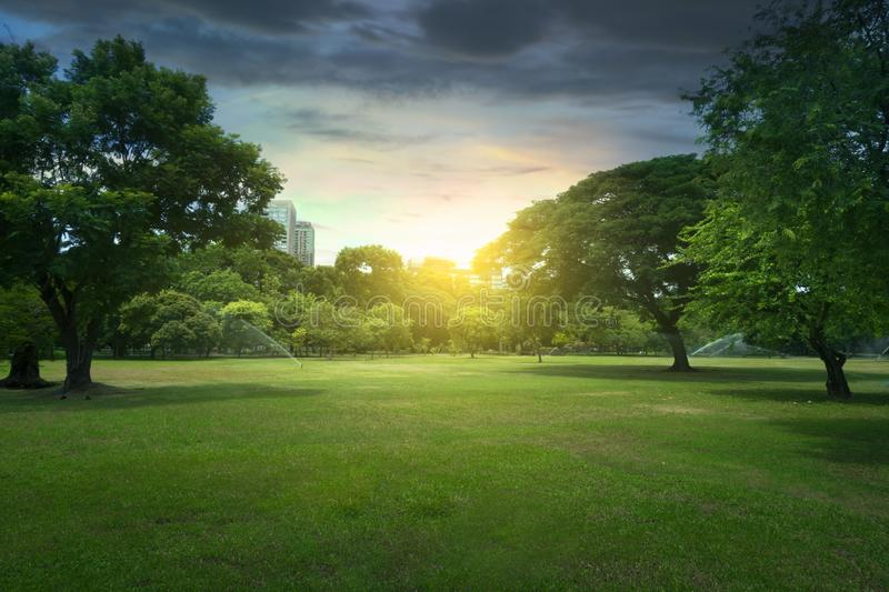 Beautiful sunset in the Lumphini Park in Bangkok, Thailand. During summer royalty free stock photo
