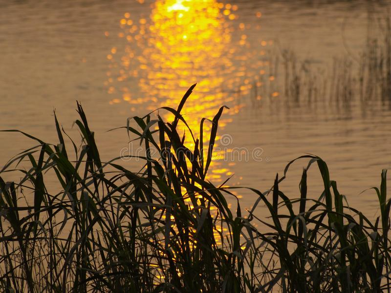 Download The Beautiful Sunset Meadow Waterside Stock Illustration - Illustration: 8293558