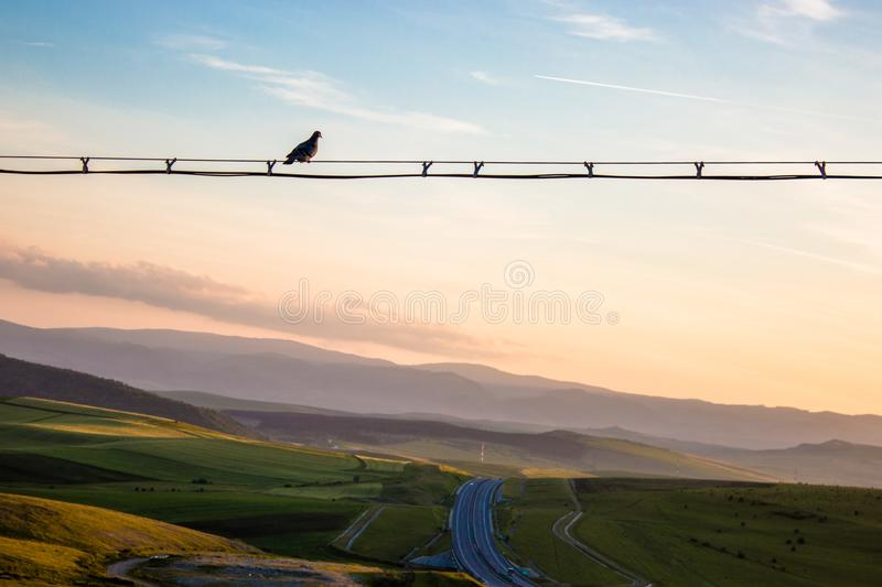 Beautiful sunset with a bird sitting on a wire and a blue sky stock photography