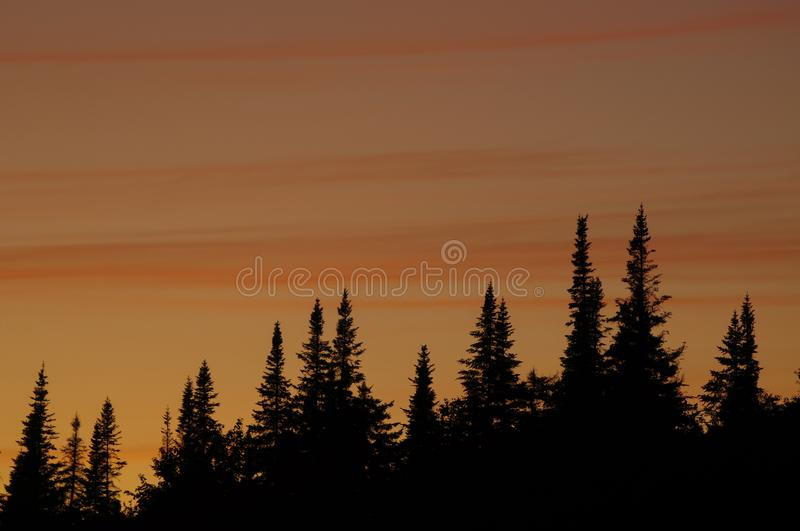 Beautiful Sunset Over Balsam Firs In The Adirondack Mountains Of. Balsam Firs At Sunset, West Canada Lakes Wilderness Area, Adirondack Forest Preserve, New York stock photos