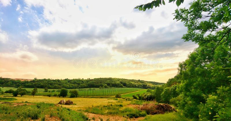 Beautiful sunset over hops field stock images