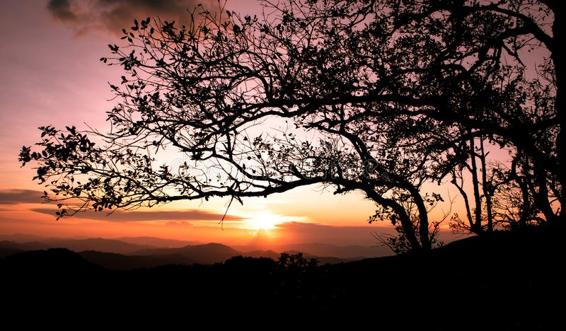 Beautiful sunset over the mountains, landscape of Phu Soi Sao, Nampad, Uttaradit province northern of Thailand. Silhouette of pine trees, landscape of phu soi royalty free stock photography