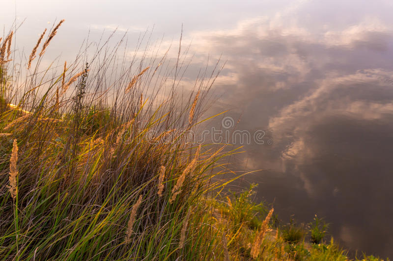 Beautiful sunset over the river. Beach with grass, plants and sedge in the sunlight. Reflection of clouds in water stock photo