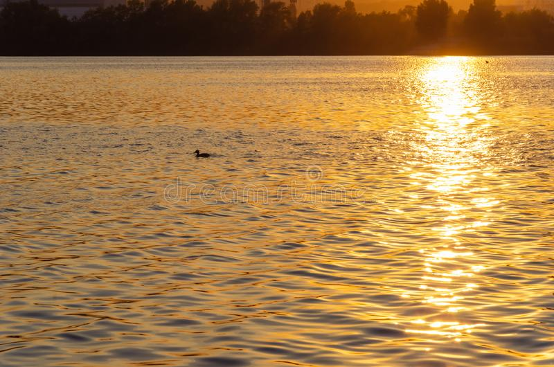 Beautiful sunset over the river. The solar path on the surface of the water and a duck. Reflection of the setting sun.  stock photo