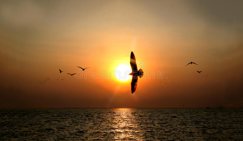 Beautiful sunset over the sea with seagull silhouettes on pier stock photography