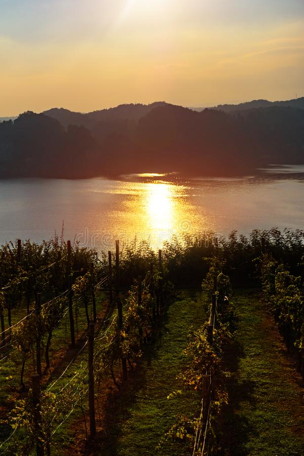 A Beautiful Sunset over vineyard overlooking the lake royalty free stock photo