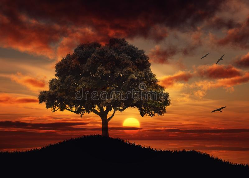 Beautiful Sunset over water tree silhouette nature landscape stock photos