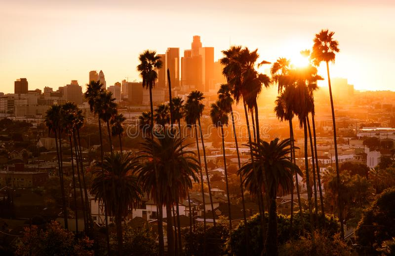 Beautiful sunset through the palm trees, Los Angeles, California. Beautiful sunset through the palm trees, Los Angeles stock photo