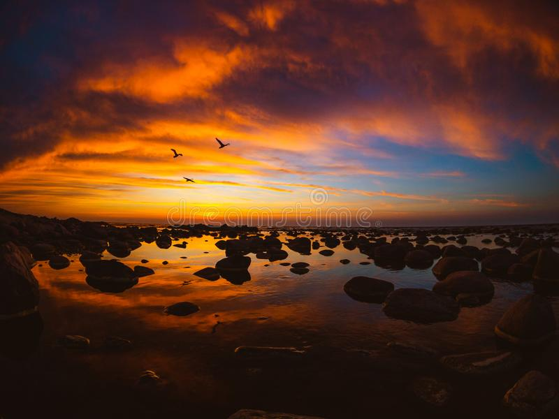 Beautiful sunset at sea side with flying swans royalty free stock photography