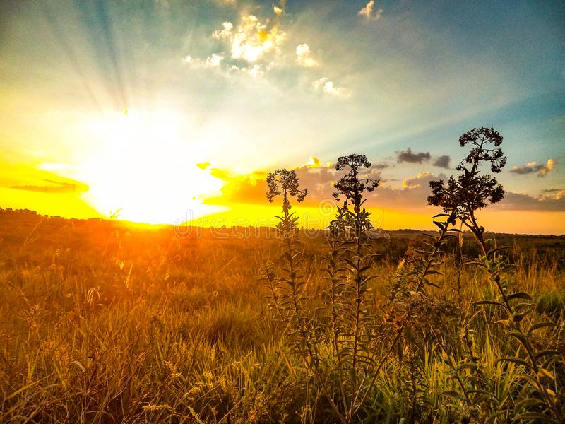 Beautiful sunset seen by roses about to bloom royalty free stock photography