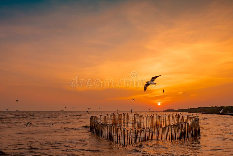 Beautiful sunset sky and clouds over the sea. Bird flying near abundance mangrove forest. Mangrove ecosystem. Good environment. Landscape of seashore or coast royalty free stock image