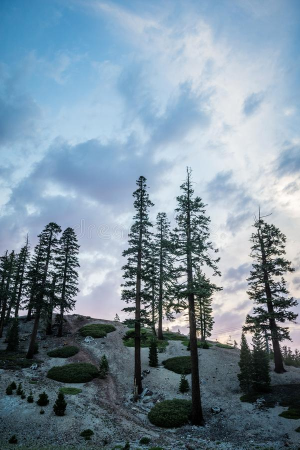 Beautiful sunset sky with Jeffrey Pine trees and interesting cloud formations in Mammoth Lakes California.  stock photography