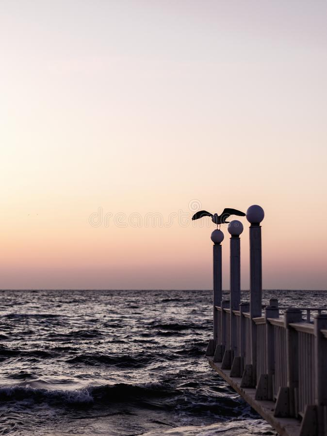 Beautiful sunset sunrise over the sea, beautiful waves and flying gulls. Selective focus royalty free stock photo