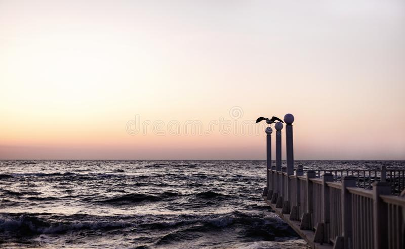 Beautiful sunset sunrise over the sea, beautiful waves and flying gulls. Selective focus stock image