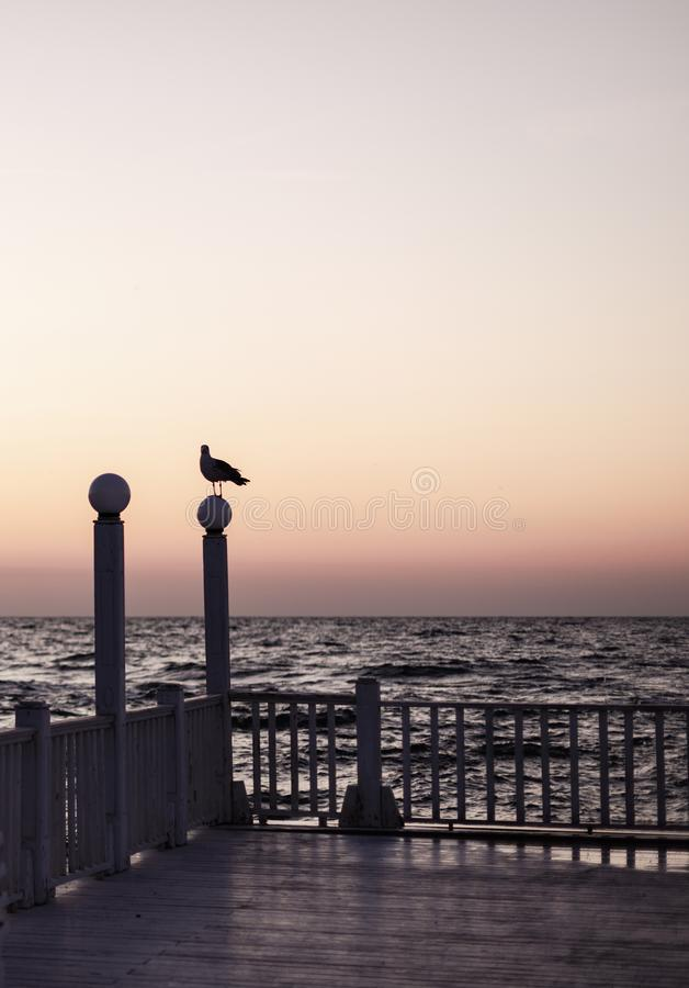 Beautiful sunset sunrise over the sea, beautiful waves and flying gulls. Selective focus stock images