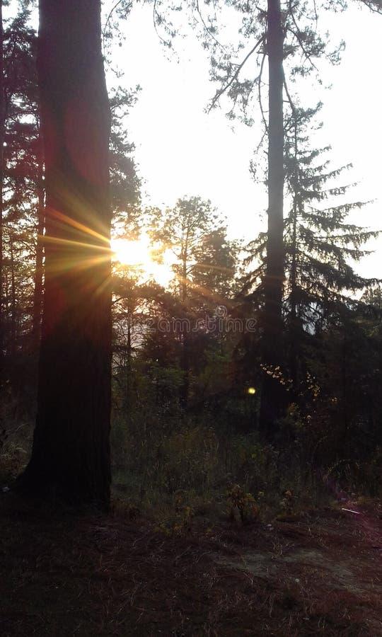 BEAUTIFUL SUNSET BETWEEN TREES royalty free stock photos