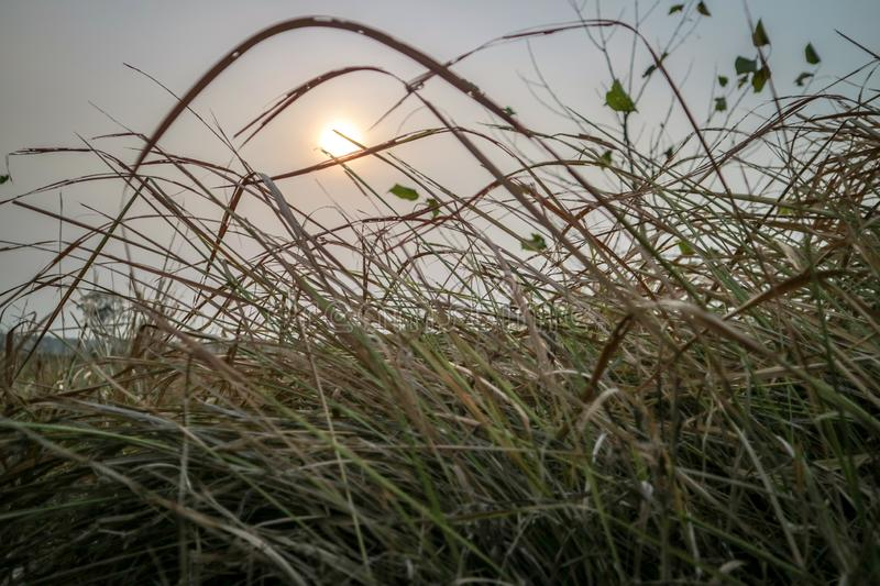 Beautiful sunsets with views of grass in the foreground. Photos taken in the city of Bekasi - Indonesia in the afternoon stock photography