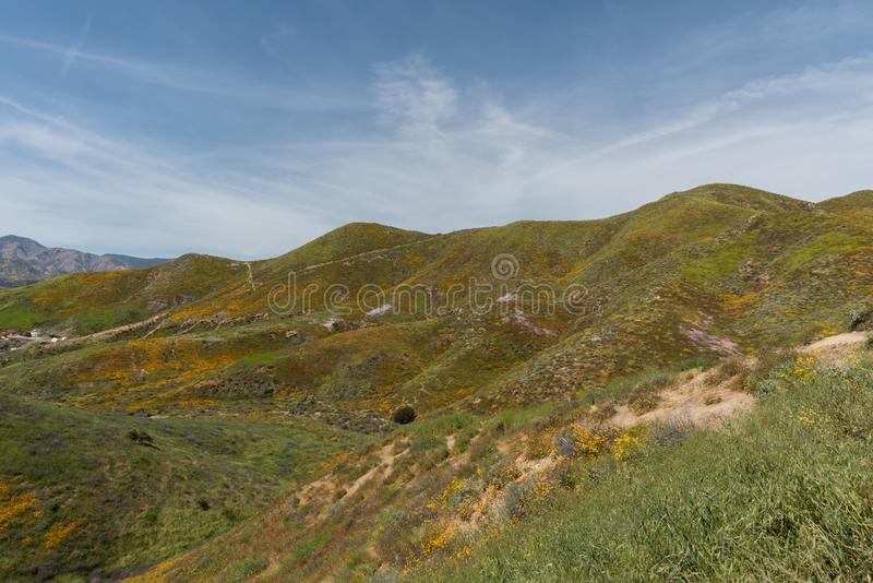Beautiful superbloom vista in a mountain range near Lake Elsinore royalty free stock images